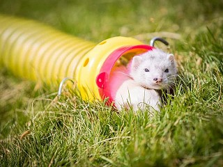 Pakefield Ferrets New for this Year
